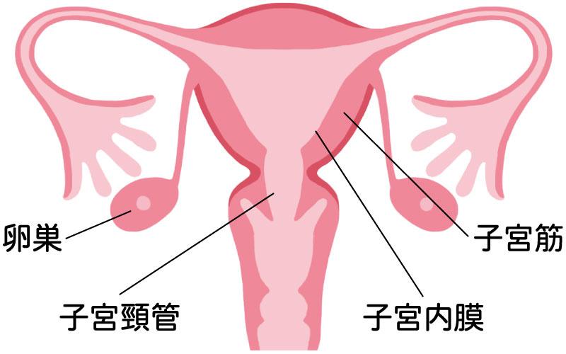 不妊 妊婦の豆知識 子宮や卵巣にトラブルがあっても妊娠できますか Part1 健美鍼灸院 東京 銀座 新橋で不妊鍼灸 不妊治療のことならお任せください 口コミでも評判